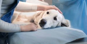 Heartworm Diseases Causes