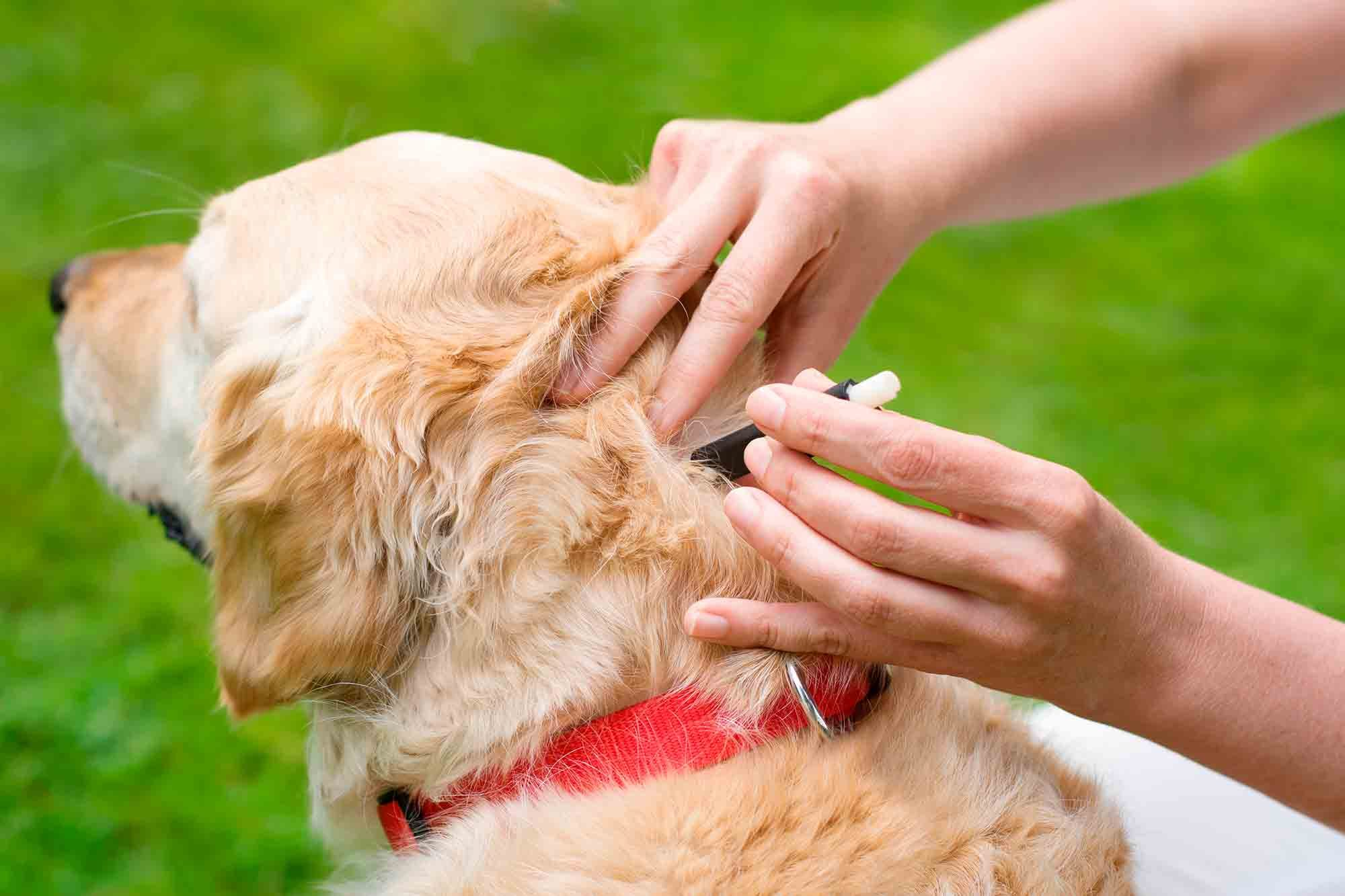 Fleas & Ticks Problems in Dogs