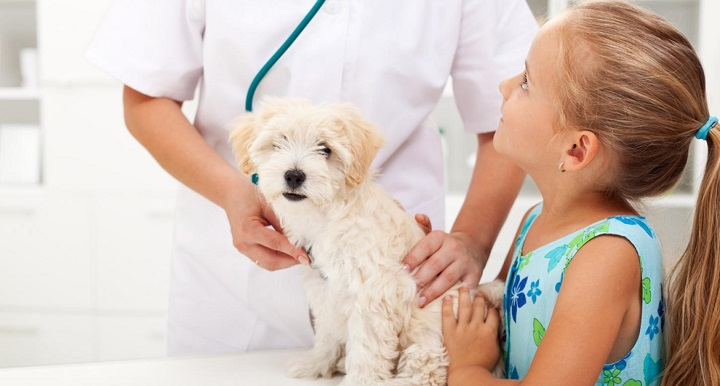 How to treat your pet from flea & tick problems