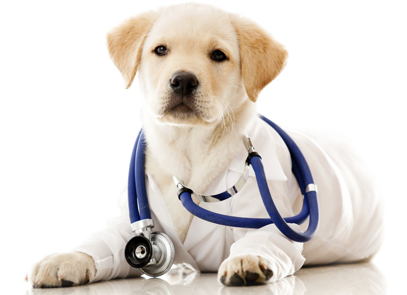 compounding pet pharmacy
