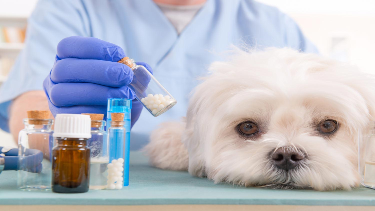 Buy Pet Medications & Drugs Online
