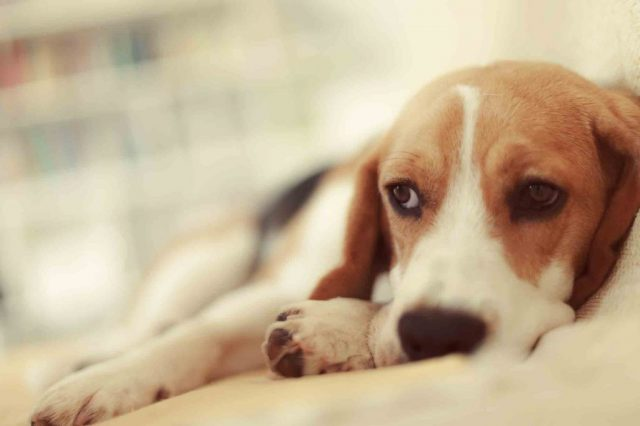 How to diagnosis urinary infection in pets
