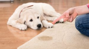 Urinary Incontinence causes & Symptoms for Dogs